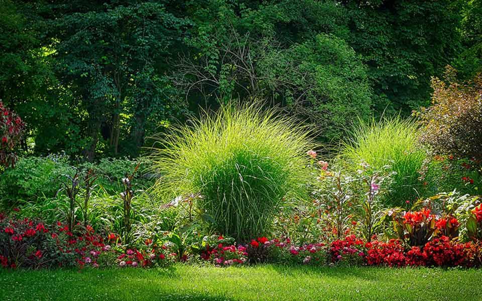 Garten & Freiland