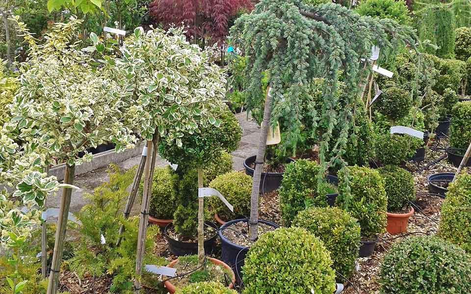 Selbstabholung in der Gärtnerei